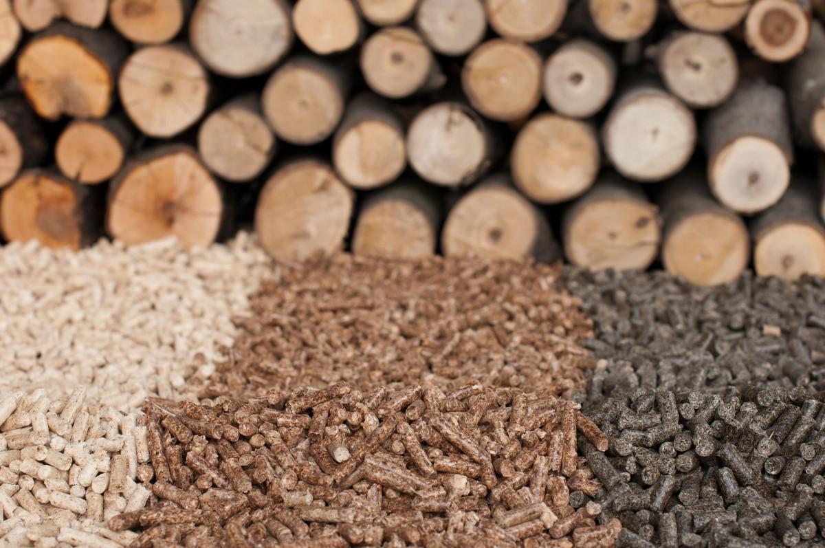 El ciclo de la biomasa