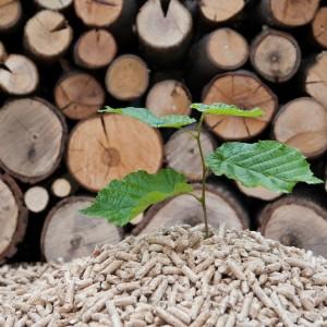 congreso-biomasa